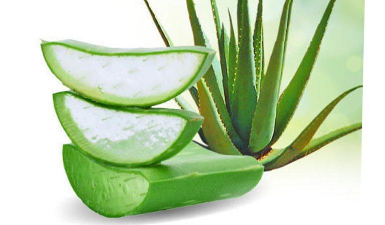 Top 10 benefits of Aloe vera