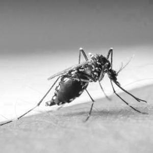 home remedies for dengue fever